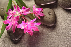 Hot stones with orchid on slate Royalty Free Stock Images