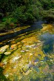 Hot Stream with mineral sediments, Waimangu Volcan. Ic Valley, Rotorua, New Zealand stock images
