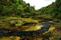 Hot Stream with mineral sediments, Waimangu Volcan. Ic Valley, Rotorua, New Zealand royalty free stock photo