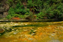 Hot Stream with mineral sediments, Waimangu Volcan Royalty Free Stock Image