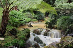 Hot stream in the Terra Nostra Parque, Azores Stock Image