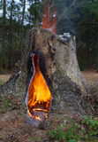 Hot stump Royalty Free Stock Photos