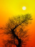Hot summer afternoon. A view of a tree silhouetted by a blazing hot afternoon sun Stock Photos