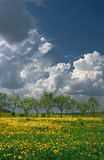 Hot summer day. Blooming meadow under a blue sky Stock Photos