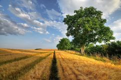 Hot summer day in the field Royalty Free Stock Photography