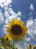Hot summer day Royalty Free Stock Image