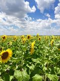 Hot summer day Royalty Free Stock Images