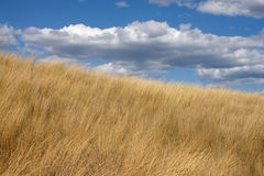 Hot summer - 2. Dry field in the hot summer in Bulgaria Stock Images