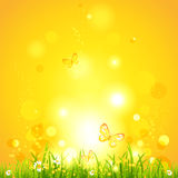 Hot summer evening. Nature background with space for text Stock Photos