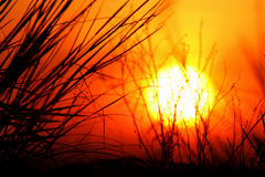 Hot Summer Sun. Summer Sunset behind grass and reeds Royalty Free Stock Photos