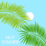 Hot summer tropical background Royalty Free Stock Photo