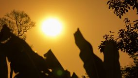 Hot sun over the tropical forest in the dry season. Thailand stock video