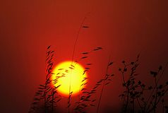 Hot Sun Summer Sunset Orange. The summer sun is extremely hot in my part of Australia. The temperature rises quickly and there are many fires breaking out royalty free stock photography