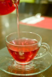 Hot tea in the cup royalty free stock image