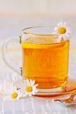 Hot tea daisy . Royalty Free Stock Image