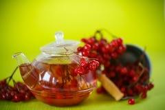 Hot tea viburnum in glass pot Stock Images