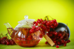 Hot tea viburnum in glass pot Stock Photos
