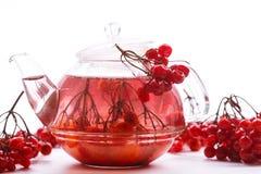 Hot tea viburnum in glass pot Stock Image