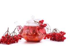 Hot tea viburnum in glass pot Royalty Free Stock Photo