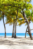Hot Tropical Beach Stock Images