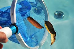 Swim spa cleaning net. Hot tub swim spa debris leaves being removed stock image