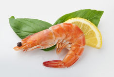 Hot-water shrimp royalty free stock image