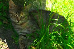 In hot weather, the cat hid in the shade of a tree. stock photography