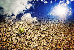Hot weather drought. Hot weather and drought concept, dry cracked earth with plant survival, background royalty free stock photography