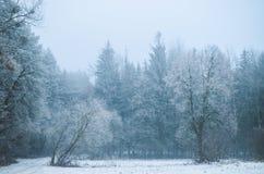 Hot winter. Fierce winter in snowy woods stock photo