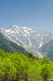 Hotaka mountain range and green tree in spring at kamikochi nagano japan Royalty Free Stock Photo
