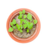 Hotchpotch with catnip plant Royalty Free Stock Photography