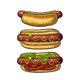 Hotdog with tomato, mustard, leave lettuce. Vector color engraving Stock Image