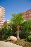 Hotel with beautiful palm and pitcher. With blue sky stock photos