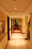 Hotel corridor with column and plant (vertical). Hotel corridor with columns, paint and plant Stock Images
