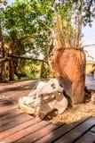 Hotel de la casa de campo de Mapula Foto de archivo