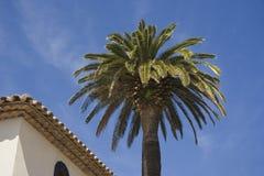 Hotel de lujo y una palmera fotografía de archivo libre de regalías