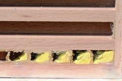 Hotel del insecto con la larva y los huevos de abejas solitarias salvajes Fotos de archivo