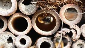 Hotel del insecto de muchas abejas metrajes
