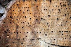 Hotel do inseto feito de um tronco de árvore fotografia de stock royalty free