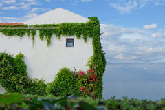 Hotel in Greece. Overgrown with ivy Stock Image