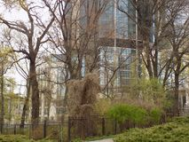 Hotel Hilton in Kiev. View from the Botanical Garden at the Hilton Hotel in Kiev. Spring of 2017 Royalty Free Stock Images