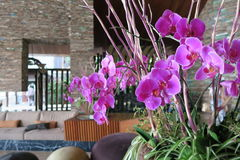 Orchids in asian hotel lobby Royalty Free Stock Images