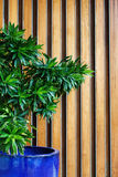 Hotel lobby with green plant Royalty Free Stock Image