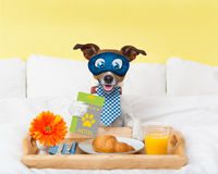 Hotel room service wtih dog Royalty Free Stock Photo