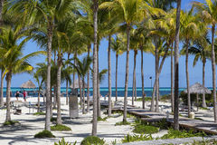 The hotel territory with palm trees on the beach. Stock Images