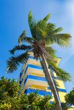 Hotel in the Tropics with a Palm Tree in the foreground. A hotel in resort area of Cuba with a Coconut tree in the foreground stock image