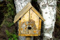 Hotel y pajarera del insecto en el árbol de abedul al principio de la primavera Imagen de archivo libre de regalías