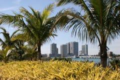 Hoteles de Miami a través de las palmeras fotos de archivo