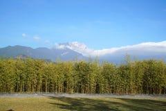 Hotell för Banyanträd i Lijiang Arkivfoton