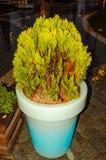 Hotelldetalj-träd Royaltyfria Bilder